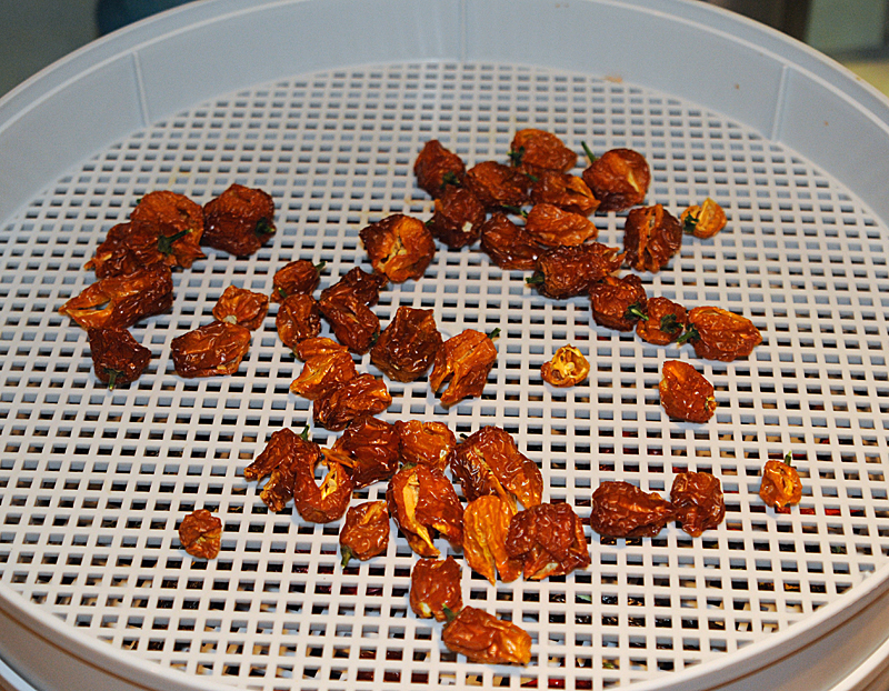 Dried-habanero